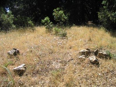 Garter snake habitat